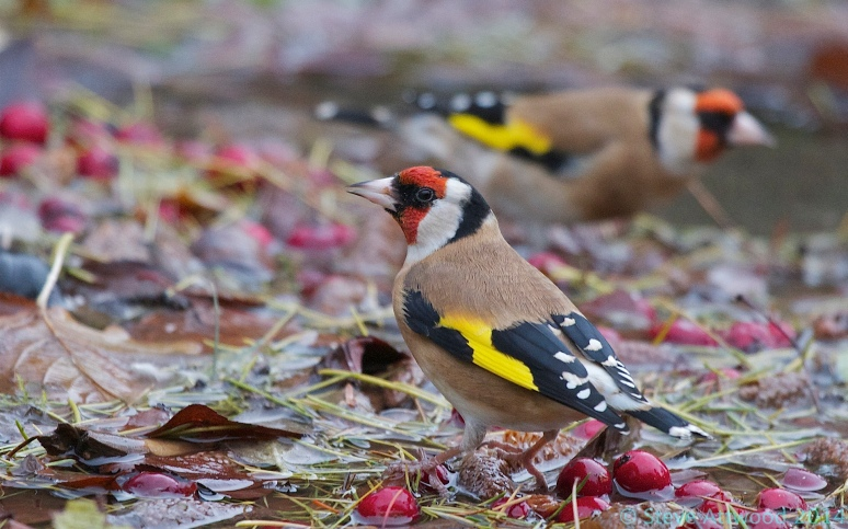 Autumn revellers include bathing birds among cast aside leaves and fallen berries
